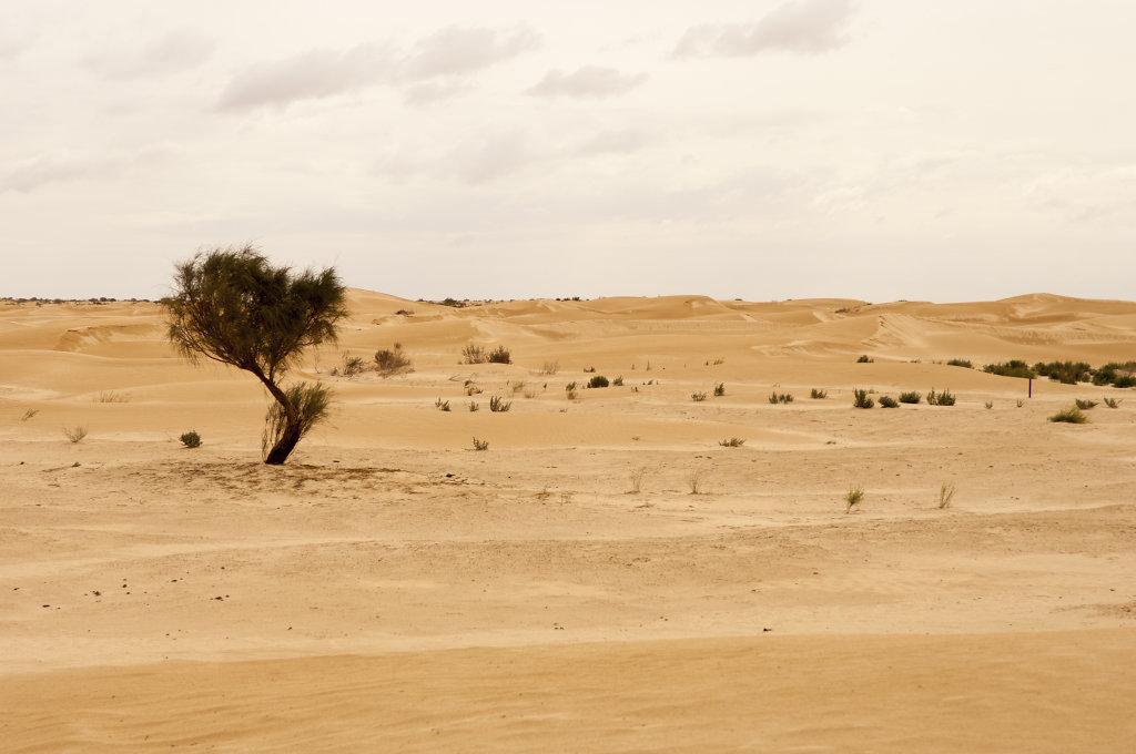 Sahara bei Douz, Tunesien 2012